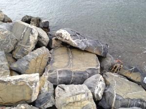 Greys - Cinque Terre